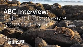 Cat parasite (Toxoplasma gondii) widespread on Kauai