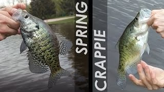 Watch us get excited over 11 inch crappie! Just a short fly fishing session on Luke's lake. The crappie were still in the shallows spawning,and we found a couple bass and bluegill along with them. I have some interesting content planned for next week! Stay Tuned!Thanks for watching!Subscribe to see all my fishing adventures!Follow @fish.fray on insta for fish pics & bonus edits!MUSIC: https://soundcloud.com/syntheticmotion/cutter
