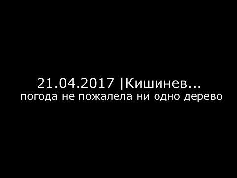 21.04.2017 Кишинев , погода не сжалилась ни над одним деревом