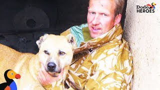 Former Soldier Is A Hero For Dogs In Afghanistan  | Dodo Heroes Season 1 by The Dodo
