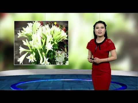 (VTC14)_ Thời tiết Hà Nội ngày 17.04.2017
