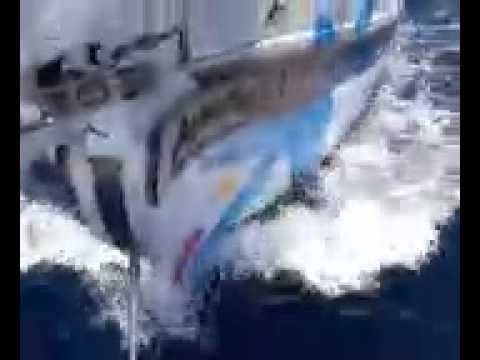 Avistamientos de delfines y tortugas en el atlantico