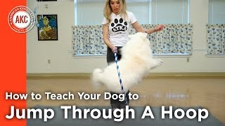 How To Teach Your Dog To Jump Through A Hoop Video