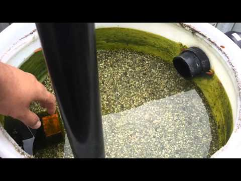 Koi Pond Sand and gravel filter How to Clean it out.