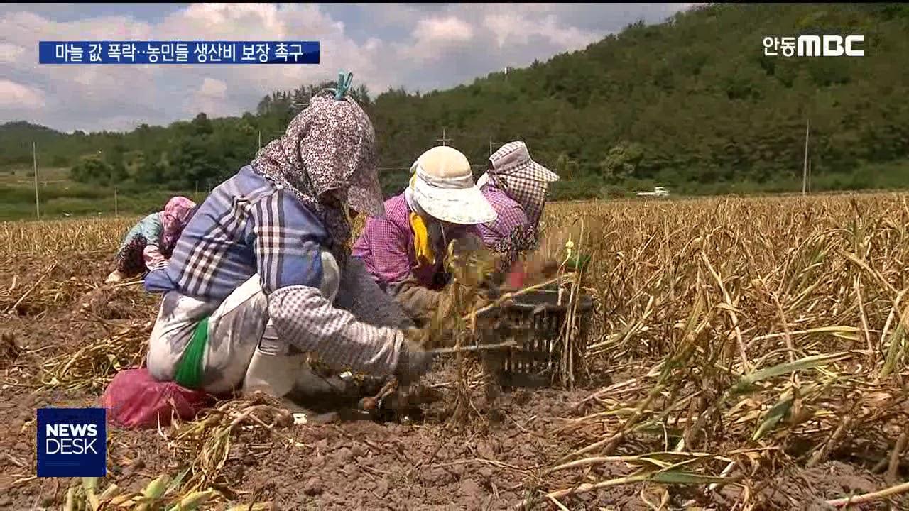 R]마늘값 폭락...농민들 생산비 보장 촉구