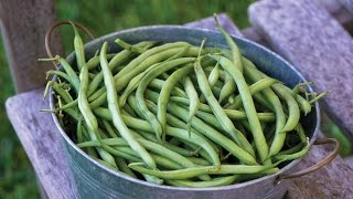 How to Grow Pole and Bush Beans