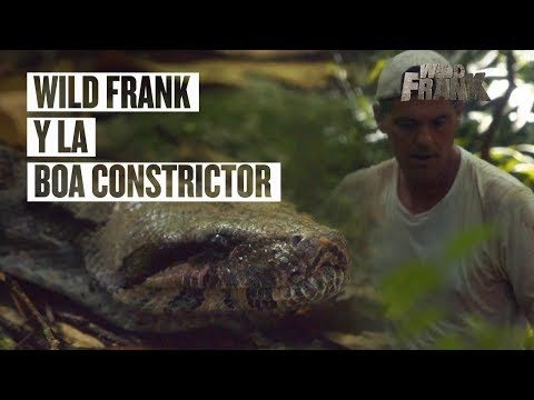 Wild Frank y el ataque de la boa constrictor