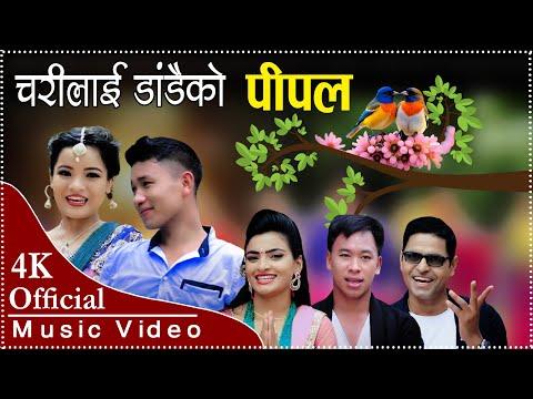 (new nepali teej song 2075/2018 mayalai mayakai jhalko charilai dadaiko pipalako चरिलाइ डाडैको पिपलको - Duration: 9 minutes, 4 seconds.)