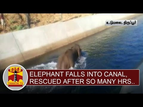Elephant-falls-into-a-Canal-Rescued-after-so-many-hours-at-Udumalai-Thanthi-TV