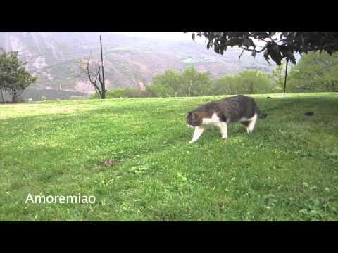 un gatto viene attaccato da un topo, guardate chi interviene!