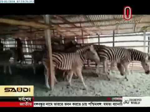 Route to smuggle wild animals (26-05-2018)