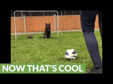 il-cane-che-gioca-a-pallone