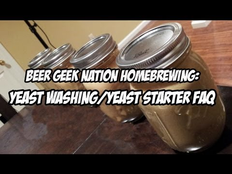 how to harvest yeast from a beer