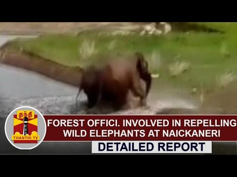 Forest-Officials-Involved-in-Repelling-wild-Elephants-at-Naickaneri--Detailed-Report-Thanthi-TV