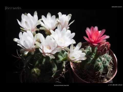 fioritura delle piante grasse
