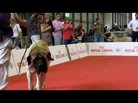 Milano World Dogs Show Italy- 12.06.2015
