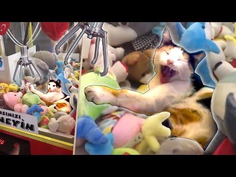 Hassut eläimet mokailee – Animals In Predicaments