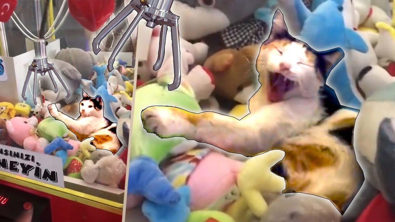 Animals In Predicaments (March 2018)   FailArmy