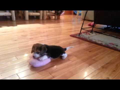 Cutest Baby Girl - Cutie Pie