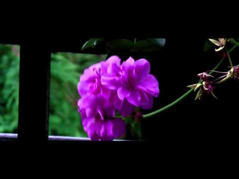 Panasonic HDC HS 100 Test