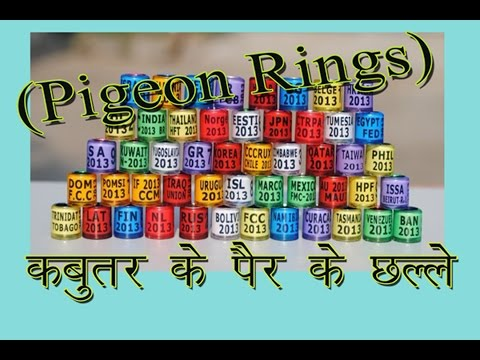 All Type of Pigeon birds Rings are  !!For Sale!! By Aman Prabhakar