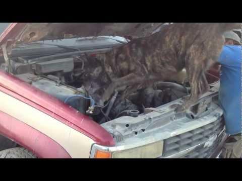 Force Dogs Entrenamiento – Perros Detectores