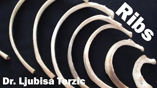 The purpose of this video is to demonstrate the features of all 12 ribs, starting with a description of a typical rib (ribs 3-10).