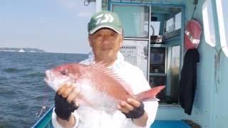 シャクリマダイ絶好機!@上総湊・加平丸/2016.09.千葉・内房、上総湊で人気の伝統釣法、シャクリマダイ。中オモリとテンヤを使った手バネで釣る真鯛は、醍醐味満点!さらに船によっては鯛ラバやひとつテンヤも受け入れており新旧さまざまな楽しみ方ができます。2016年9月に加平丸から取材した様子です。紙面では、9月23日号の週刊つりニュース関東版で紹介しています。加平丸http://www.kahei-maru.com住所 千葉県富津市湊94-1TEL・FAX携帯電話 0439-67-1293090-2638-3612、090-8776-3482駐車場 船着場の近くにあります予約方法 電話予約のみ民宿 斡旋致します。船 25人乗・19人乗の2隻(トイレ付)貸し竿、しかけは船に常備週刊つりニュースHPhttp://tsurinews.co.jp/