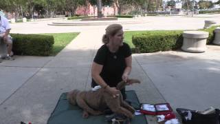 First Aid and CPR for Dogs