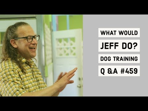 Stop dog barking in crate | Training a fearful dog | What Would Jeff Do? Dog Training Q & A #459