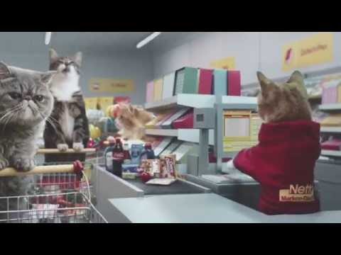A Supermarket for Cats