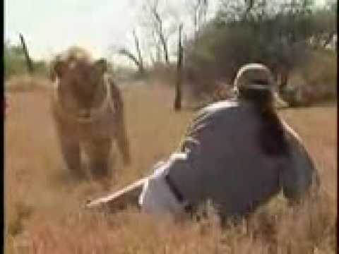 must see - look at this brave how he is facing lion.
