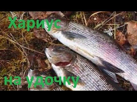 рыбалка на блесну на енисее
