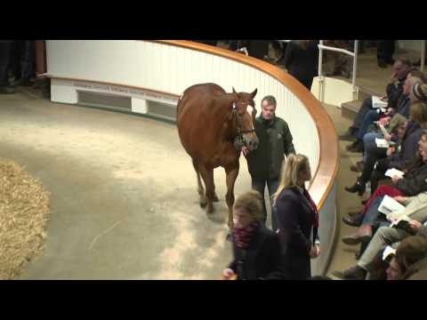 Tattersalls December Mare Sale Day 1 Video Review 2014