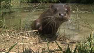 Lingfield United Kingdom  City new picture : British Wildlife Centre; Discover Britain's Wonderful Wildlife
