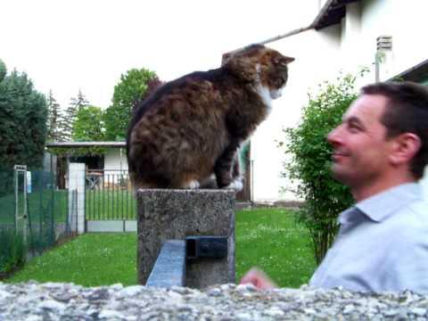 gatta molto affettuosa - guardate cosa fa