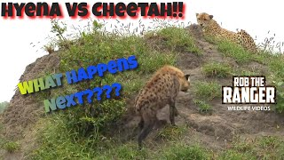 A Male cheetah with an inured foot spots a hyena approaching.This week's guest presenter is Bryce from Righteous Reptiles,Check out his channel here: https://www.youtube.com/channel/UCtsT3z9zvVrBCnxI1hPFUegFilmed at Idube Game Reserve in the Sabi Sand Wildtuin, Greater Kruger National Park, South Africa (http://www.idube.com/static)Filmed in 4K UHD resolution using the Sony AX100 video cameraSubscribe for more great wildlife clips: http://goo.gl/VdOHuSFollow #nowfilming on social networks for LIVE photo updatesROB THE RANGER WILDLIFE VIDEOS on Social Networks:TWITTER: http://goo.gl/U8IQGfBLOG: http://goo.gl/yJJ3pTFACEBOOK: http://goo.gl/M8pnJhGOOGLE+: http://gplus.to/robtherangerTUMBLR: http://goo.gl/qF6sNS#YouTubeZA#YouTubeSSA#SAYouTubers