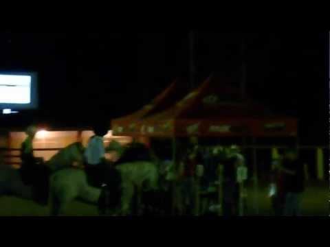 Soneto da Falupa - Haras Santa Juliana