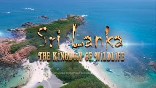 Sri Lanka's Amazing Wildlife