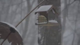 Bird Feeder Timelapse in 2016 Blizzard Jonas