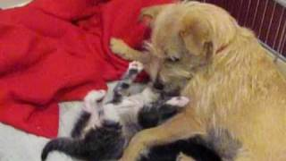 Please consider becoming a foster parent today - Please SUBSCRIBE (By Eldad Hagar)