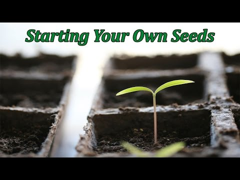 Video Seed Starting for Beginners | Step-by-Step Guide | 15 Years of Experience download in MP3, 3GP, MP4, WEBM, AVI, FLV January 2017
