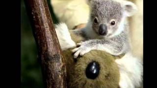 Funny Australian Animals Living In A Land Down Under