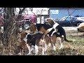 ♥ ♥ ♥ FUNNY BREEDING DOG VIDEO♥ ♥ ♥ AnimalS LovE ♥ ♥