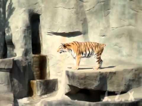 憤怒鳥攻擊真實版,驚驚虎嚇到腿軟!