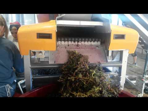 Selectiv Process Winery S de Pellenc - Sistema de trabajo [HD]