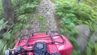 10. Suzuki Kingquad 400 Trail Ride and Fox Sighting