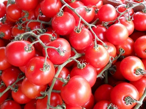 Tomates, variedades del mundo
