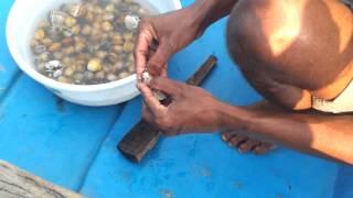 Video Selling 'Pearls' in Chilika lake, Orissa (Odisha) MP3, 3GP, MP4, WEBM, AVI, FLV Juni 2018