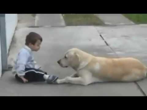 這位有唐氏症的小男生本來一向自己孤單一人,當拉布拉多緩緩靠近做出的溫暖舉動...所有網友都爆哭了!